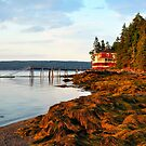 House at the end of the Road, Deer Isle, Maine by fauselr