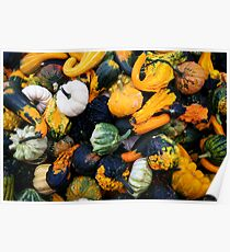Colorful pumpkins  Poster