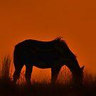 Sundown by wayofthewarior