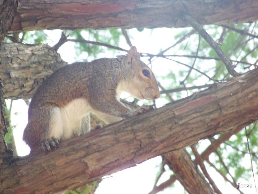 Nuts by jinnxe