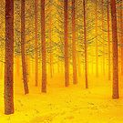 FOREST SCENE. by Terry Collett