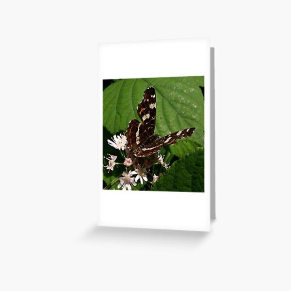 Map (Araschnia levana) Greeting Card