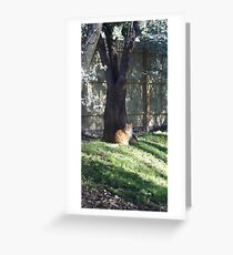 Morning among the blossoms Greeting Card