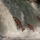 A Trio of Jumping Salmon by Tim Grams