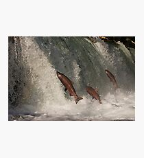 A Trio of Jumping Salmon Photographic Print