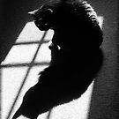 Me & My Shadow by Jamie Lee