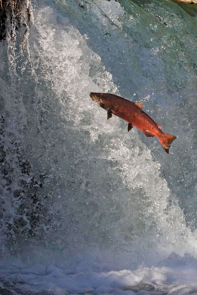 Leaping Salmon by Tim Grams