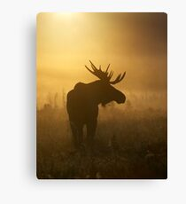 Bull Moose in Fog Canvas Print