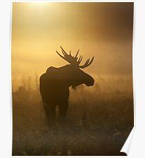 Bull Moose in Fog Poster