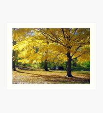 Central Park, New York City  Art Print
