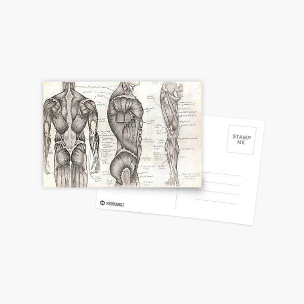 Human Anatomy 1 Postcard