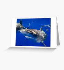 Close Encounter With An Oceanic White Tip Shark Greeting Card