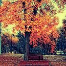 Autumn day by Angela King-Jones