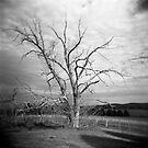The Dairy Tree by sandybirze