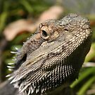 Bearded Dragon... by A1000WORDS