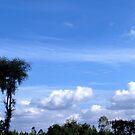 Landscape by Shiju Sugunan
