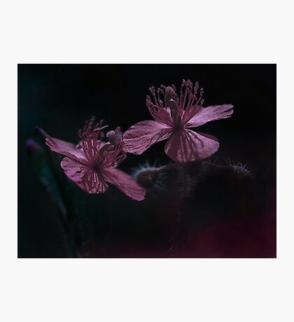 Evening Flowers Photographic Print
