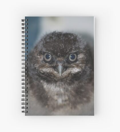 Burrowing Owlet Spiral Notebook