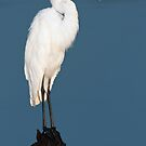 Great Egret by Michael Mill