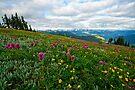 Olympic Mountains Wildflowers by Dan Mihai