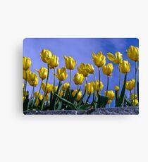Botanical Gardens Spring—Tasmania Canvas Print