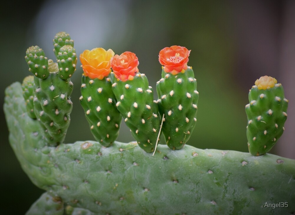 Cactus by Angel35