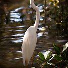 Great Egret, Ardea alba #1 by Odille Esmonde-Morgan