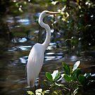 Great Egret, Ardea alba #2 by Odille Esmonde-Morgan