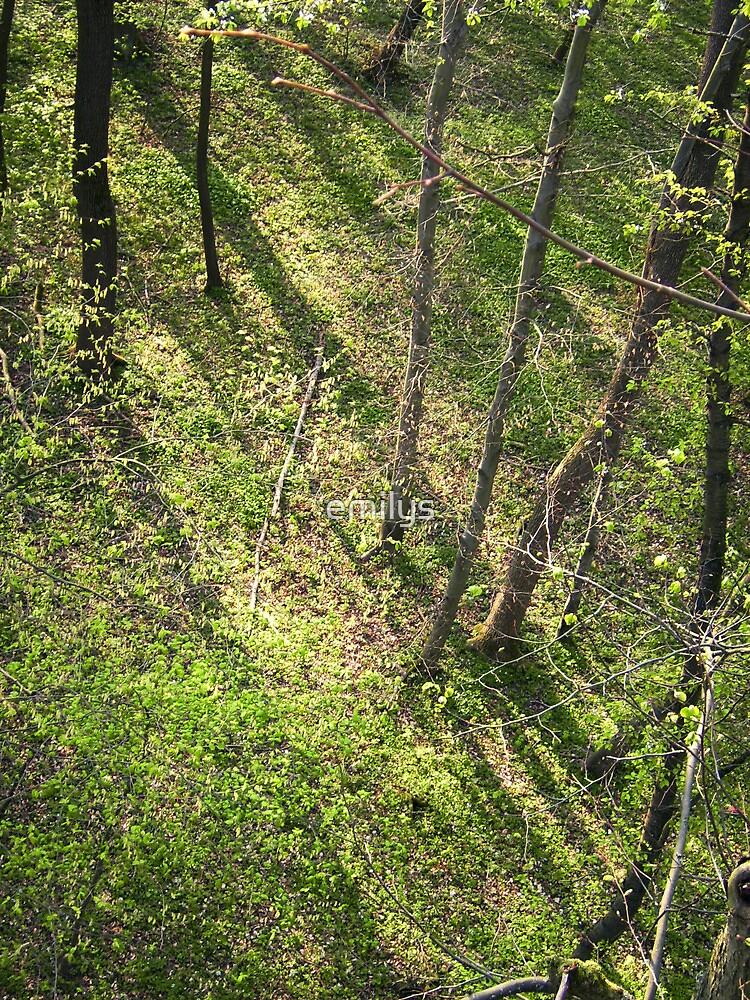 Schattenbäume - Baumschatten by emilys