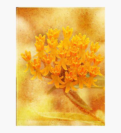 Summer Soft and Orange Fotodruck