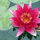 Floral Eloquence - Vibrant Pink Water Lily von BlueMoonRose