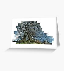 My Sycamore Greeting Card