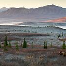 An Autumn Morning in Denali National Park by Tim Grams