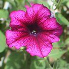 Psychedelic Petunia by Karen K Smith