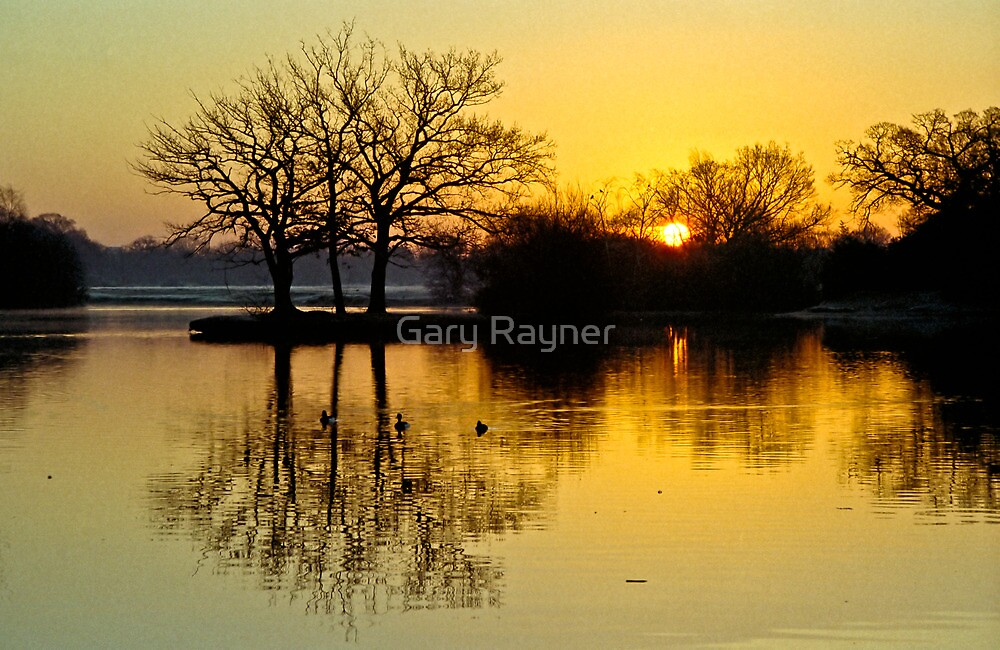 New Morning Epping Forest UK by Gary Rayner