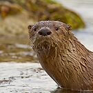 River Otter Portrait by Tim Grams
