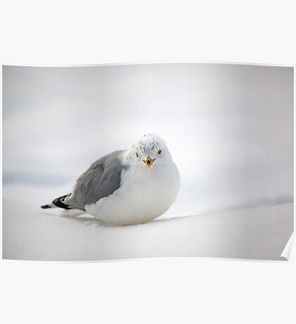 Snow Gull Poster