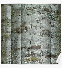 Conifer Trunk Poster