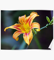 Brightest Day Lily Poster