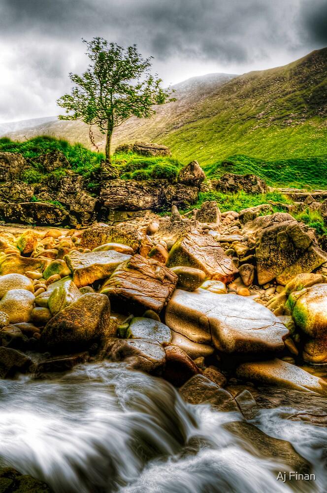Lone Tree On River Etive by Aj Finan