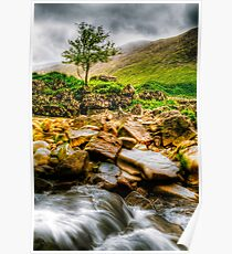 Lone Tree On River Etive Poster