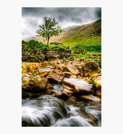 Lone Tree On River Etive Photographic Print