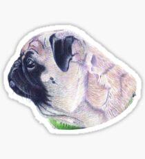 Pug Portrait T-shirt or Hoodie Sticker