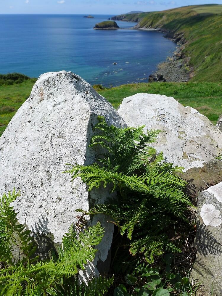 Rocks and ferns above Porth Ysgo, Llyn, North wales. by Anna Myerscough