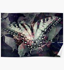 Swallowtail 3 Poster