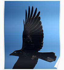 Torresian Crow Poster