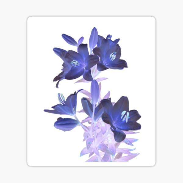 Lilies on a White Background Sticker