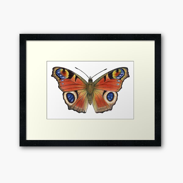 Peacock Butterfly (Inachis io) Framed Art Print