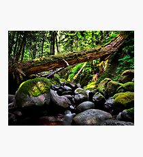 In The Shadows ~ Oregon Cascades ~ Photographic Print