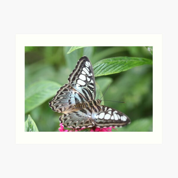 Blue and White Butterfly Art Print